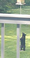 Name: Standing Bear.jpg Views: 62 Size: 75.6 KB Description: