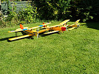 Name: Three Tiger Moths.jpg