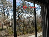Name: IMGA00862.jpg Views: 102 Size: 138.0 KB Description: Where the champ is in that tree