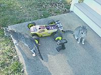 Name: downsize.jpg Views: 84 Size: 105.9 KB Description: My Losi 8ight-T 2.0 truggy and my cute kittens (one in front is socks and the one in the back is mittens)
