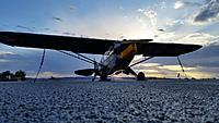 Name: Piper L-4 GrassHopper 002.jpg