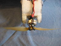 Name: Peregrine tail 11-08 006.jpg
