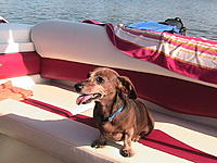 Name: America's Pup.jpg Views: 126 Size: 244.1 KB Description: My America's Pup Georgie, chase boat spotter.