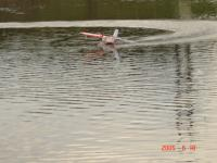 Name: DSC05902.JPG Views: 255 Size: 39.7 KB Description: Playing U-turns on the water