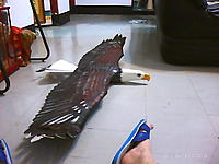 Name: PICT0260.jpg