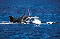 Name: JAWS2520shark2520attacks2520plane.jpg Views: 293 Size: 45.3 KB Description: