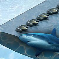 Name: shark.jpg