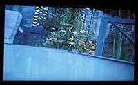 Name: backyard view.jpg Views: 432 Size: 61.0 KB Description: