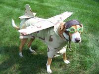 Name: dog fighter.jpg Views: 126 Size: 72.6 KB Description: