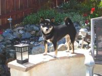 Name: Dogs 1.jpg