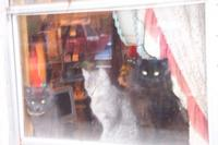 Name: the cats.jpg