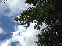 Name: plane in tree.jpg