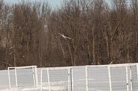 Name: Frozen Finger Flyin-18.jpg Views: 56 Size: 286.5 KB Description: