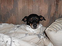 Name: DSCN1884.jpg Views: 277 Size: 303.1 KB Description: She was snoring so loud ,she woke herself up !  Such a sidekick.
