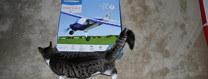 Our cat Max always studies my plane's and likes to make one bite (just one) in the rudder