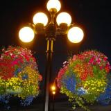 Two of the many hanging flower baskets in Voctoria on Vancouver Island Canada.
