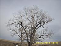 Name: 2013-Plane in tree.jpg Views: 109 Size: 272.4 KB Description: