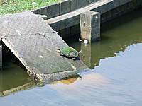 Name: DSCF0597.jpg