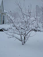 Name: DSCF1300.jpg