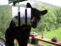 Name: bear1.jpg Views: 121 Size: 100.7 KB Description: