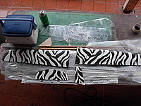 Name: Zebra wings (2).JPG