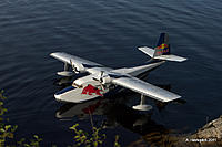 Name: arvid_albatross.jpg