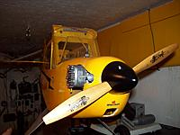 Name: piper1-7.jpg
