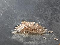 Name: Image00015.jpg