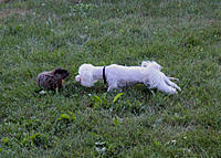 Name: Apollo and the Groundhog.jpg Views: 94 Size: 307.6 KB Description: