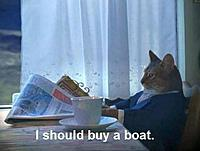 Name: i-should-buy-a-boat-cat.jpg