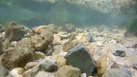 Name: SJ5000+ Under sea with waterproof case 1080p 60fps.mp4_snapshot_00.33.jpg Views: 249 Size: 210.6 KB Description: 0:33