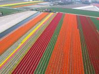 Name: f070414102252_0640.jpg Views: 219 Size: 72.2 KB Description: Flowerfields along the Zwartelaan in Lisse