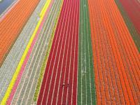 Name: f070414102256_0640.jpg Views: 259 Size: 83.7 KB Description: Flowerfields along the Zwartelaan in Lisse