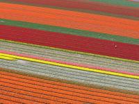 Name: f070414102304_0640.jpg Views: 202 Size: 81.6 KB Description: Flowerfields along the Zwartelaan in Lisse