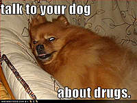 Name: funny-dog-pictures-talk-drugs.jpg