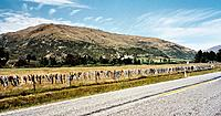 Name: 1280px-Cardrona_bra_fence.jpg