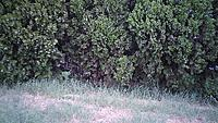 Name: treesgrass.jpg