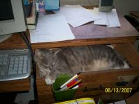 Name: 100_0034.jpg Views: 202 Size: 74.8 KB Description: cat in drawer waiting while I am web browsing