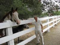 Name: horse 80%.jpg Views: 1117 Size: 138.4 KB Description: