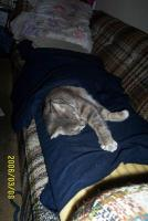 Name: dcp_3030.jpg Views: 400 Size: 86.1 KB Description: I need more blanket.