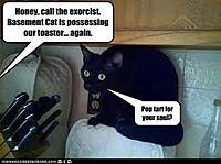 Name: cat.jpg Views: 462 Size: 9.4 KB Description: