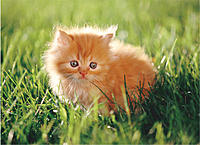 Name: kitten.jpg Views: 141 Size: 78.6 KB Description: