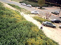 Name: IMG_0084.jpg Views: 97 Size: 141.9 KB Description: Thats me!-Just before landing ..Landed soft on these bushes