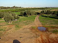 Name: IMG_0970nm.jpg