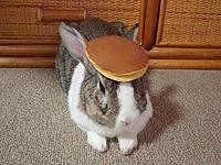 Name: pancake_bunny.jpg Views: 234 Size: 120.6 KB Description: