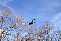Name: dji in arena.jpg