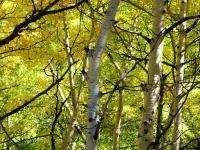 Name: Kebler Pass 029.jpg Views: 290 Size: 226.2 KB Description: Lotsa fall colors...