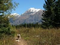 Name: Kebler Pass 026.jpg Views: 381 Size: 169.5 KB Description: Buster doin' a wheelie on Lost Lake trail