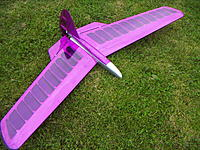 Name: Buzzard  005.jpg