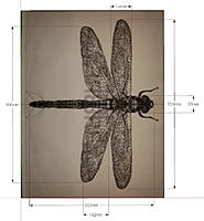 Name: Dargonfly drawing.jpg